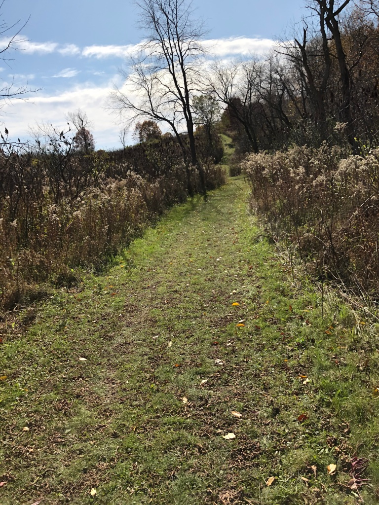 Grassy trail with fall foliage on either side.