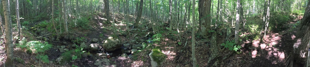 Panoramic photo of the forest along the southern end of the Greenstone Ridge Trail on Isle Royale National Park with the sun filtering through the trees on the greenery and rocks.