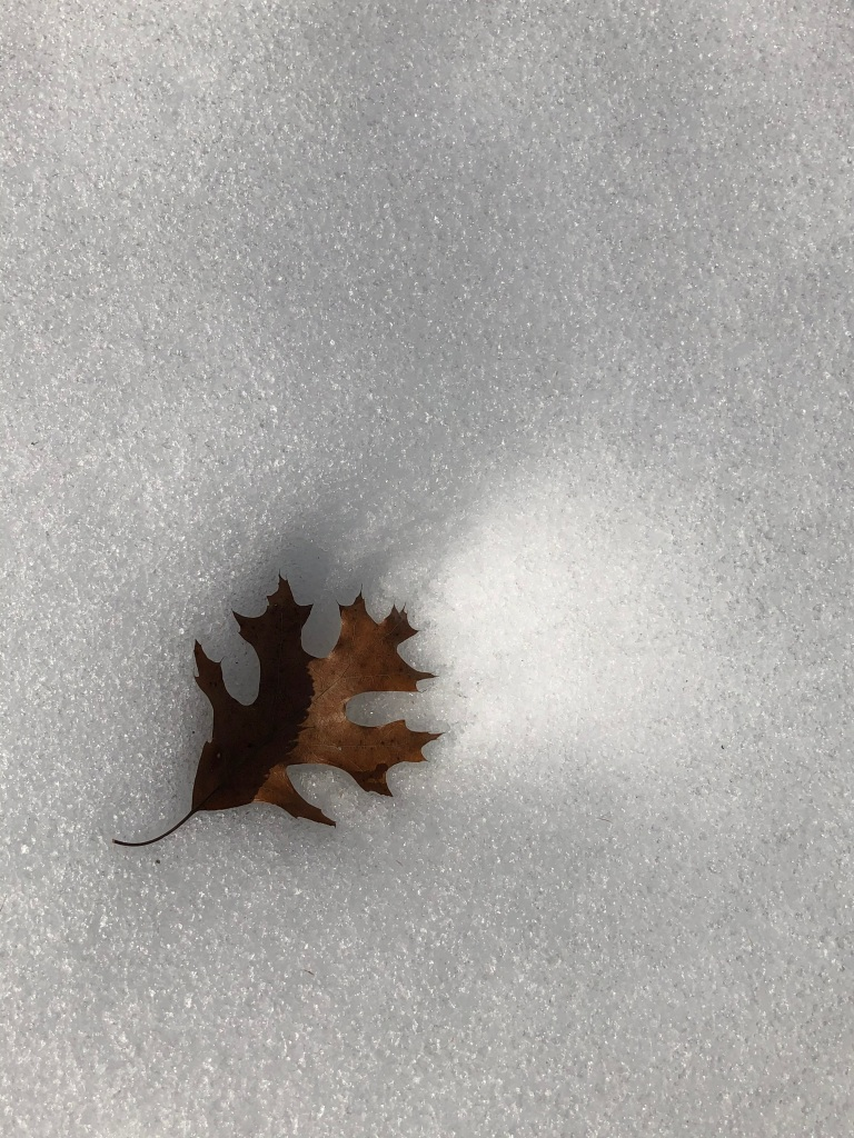 Image of an oak leaf on a background of snow.