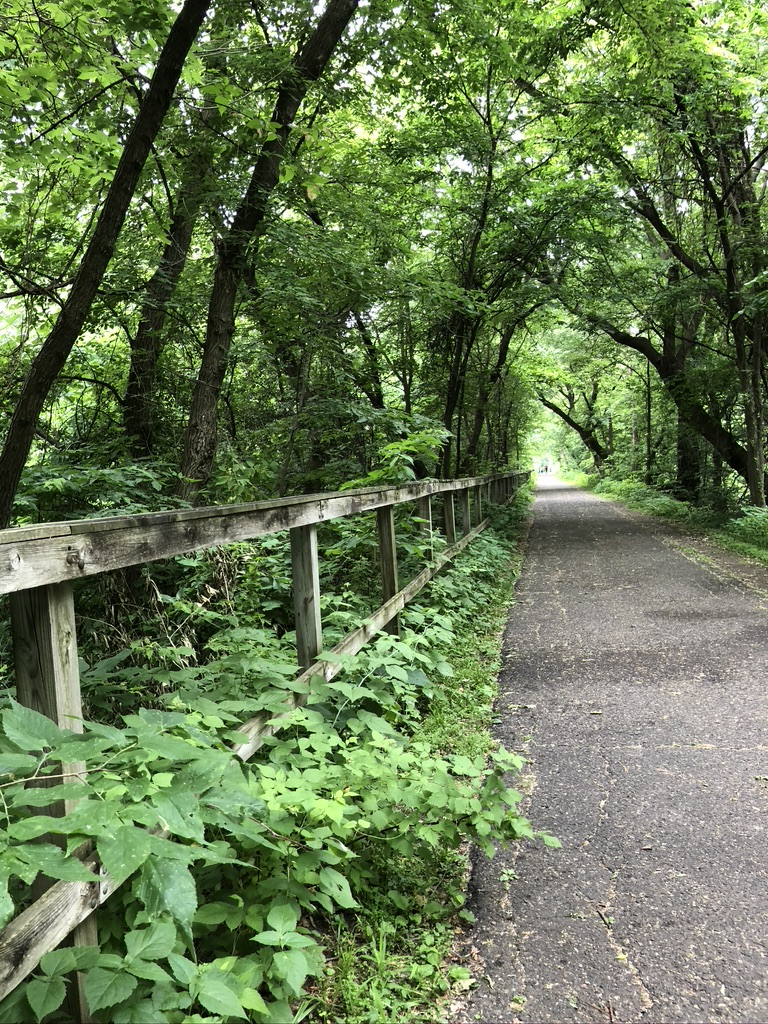 Photo of an asphalt paved trail heading into the distance. On the left side of the image is a wooden fence surrounded by green vegetation. The path has a canopy of trees.