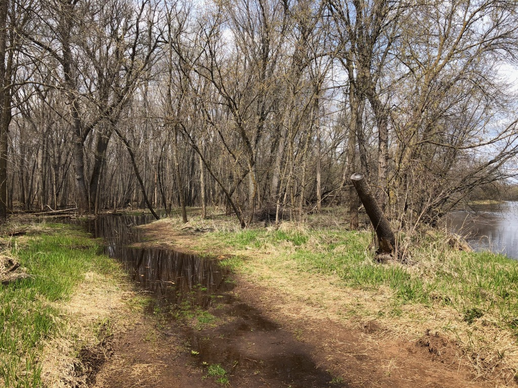 The image shows a section of trail submerged with narrow stretches of green grass on either side. There are trees bordering the grass and a small bit of river is visible to the right side of the image.
