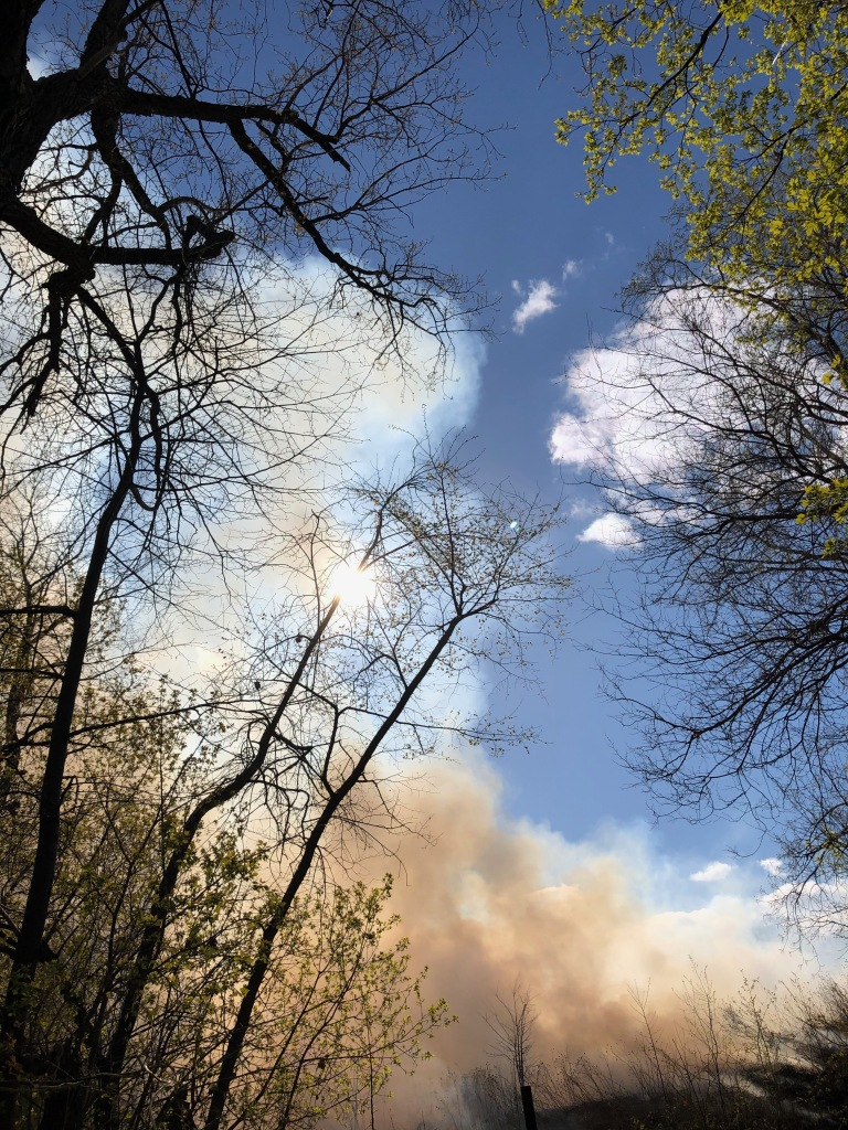 A photo of the sky through trees. The sky is mostly clear with smoke from the prescribed burn rising from the ground.
