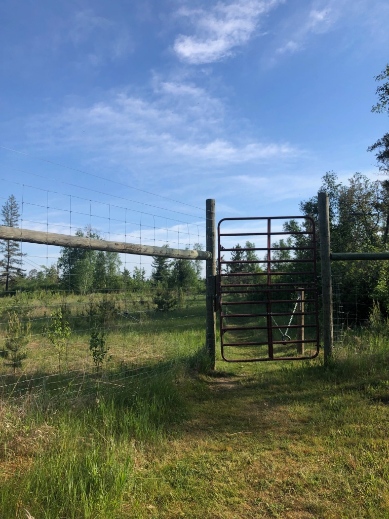 The image is of a tall fence with a large metal gate. A trail in the green grass leads up to the gate and then disappears off to the right of the image in the background. Overhead there is a clear blue sky with a few wispy, white clouds. Pine trees dot the landscape behind the fence.